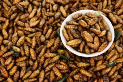 Εγκρίθηκε το πρώτο είδος εντόμου ως τρόφιμο στην ΕΕ