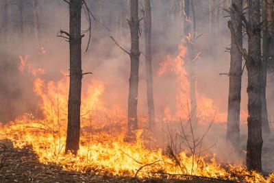 Αντικαρκινική Εταιρεία: Eκπέμπει SOS για τις χημικές ουσίες από τις φωτιές